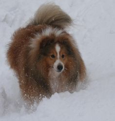 Nugget in the snow