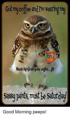 Image viaAn owl knows all the secrets of the forest, but tells them in a voice we cannot understand.Image viaBaby Owl Pictures: Photos of Cute Animals, Young OwlsImage Animals And Pets, Baby Animals, Funny Animals, Cute Animals, Funny Owls, Baby Owls, Angry Animals, Nature Animals, Wild Animals