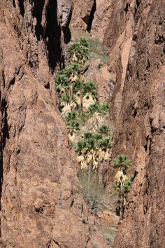 Palm Canyon, Kofa National Wildlife Refuge, AZ Fantasy Series, Grand Canyon, Palm, Wildlife, Spring, Photos, Travel, Viajes, Grand Canyon National Park