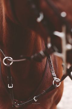 "www.horsealot.com, the equestrian social network for riders & horse lovers | Equestrian Fashion : ""New English"" Collection, Dy'on."