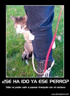 Gato y esclavo de paseo