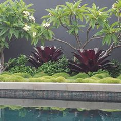 🌟Tante S!fr@ loves this pin🌟As Sydney heads into what could be the hottest temperatures this summer we all need to plan our cool down. These cooling tones poolside are already putting me in the mood. Mosman project with architects Free Landscape Design, Landscape Design Software, Landscape Plans, Tropical Landscaping, Tropical Garden, Garden Landscaping, Landscaping Ideas, Back Gardens, Outdoor Gardens