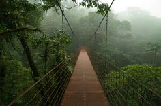Private Day Trip to the Monteverde Cloud Forest from Liberia On this one day experience you will have the chance to visit one of the most amazing areas of Costa Rica. Enjoy your private tour to the Monteverde Cloud Forest to see the hanging bridges and hummingbird garden. Learn about the famous coffee that grows in the forest. The flexibility of this private tour allows you to explore at your own pace.The cloud forest of Costa Rica is a unique natural green experience that you...