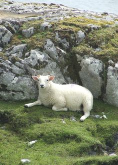 I'm a lamb who rests upon the rock solid foundation of Jesus and all He's done, all He's doing and all He will do. ~ Harris Sheep