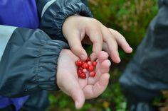 Free berries in Norway Photo: Elisabeth Høibo©Visit Sørlandet