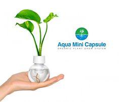Aqua Mini Capsule