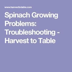 Spinach Growing Problems: Troubleshooting - Harvest to Table