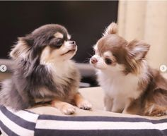 Super Cute Puppies, Cute Dogs And Puppies, Baby Dogs, I Love Dogs, Happy Animals, Funny Animals, Cute Animals, Cute Animal Pictures, Dog Pictures