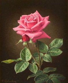 Wolfgang Grünberg - A pink rose, oil on panel, x 23 cm. Beautiful Rose Flowers, My Flower, Flower Art, Beautiful Flowers, Art Floral, Rose Reference, Watercolor Rose, Color Rosa, Flower Wallpaper