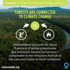 Remember that #forests are crucial in the fight against #climatechange. To stop climate change we have to stop deforestation. An investment of US $30 billion fighting deforestation could provide a return of $2.5 trillion in saved products and services such as timber soil protection freshwater flow and #climate stability. | photo: @conservationorg  #ineednature #cop21 #deforestation #conservation #nature #naturelover #enviro4change #hope #future #sustainability #happiness #animals #earth…