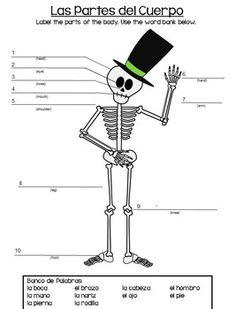 spanish body parts label the skeleton spanish body. Black Bedroom Furniture Sets. Home Design Ideas