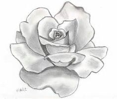 flower sketch - - Yahoo Image Search Results