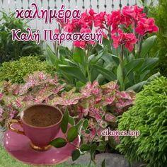 ΚΑΛΗΜΕΡΑ - Αναζήτηση Google Flowers Gif, Plants, Google, Plant, Planets