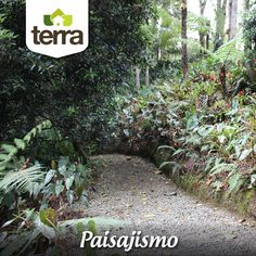 Desde pequeños proyectos de #paisajismo,  hasta grandes espacios, en donde elegir las plantas, las formas, los senderos y la protección de árboles nativos es fundamental para el disfrute de tu proyecto de diseño y mejoramiento de jardines. En #TerraPyJ te apoyamos para que lo ¡hagas realidad!