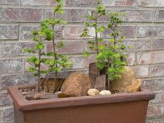 How to make a modified bonsai forest.
