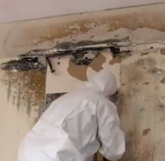There are many #companies which specialise in #removing these fungal infestations so that the #house or #building can continue to preserve its beautiful and healthy appearance. For #black #mold removal, Toronto has many #services as it is one of the coldest and most humid #cities.