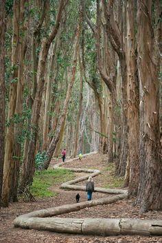 Northern California Redwoods Drive-Thru Tree (blog post ...