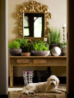 When your animals are your family, keeping them safe is a top priority. One way to watch over them is to choose pet-friendly houseplants for your home. Nontoxic plants are a great way to add color and texture to your decor while keeping your furry friends safe. We've rounded up a list of indoor plants safe for cats and dogs.