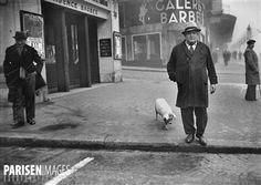 Cochon dans la rue. Paris, décembre 1941.