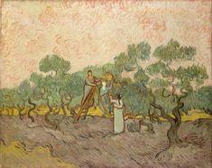 Women Picking Olives by Vincent van Gogh