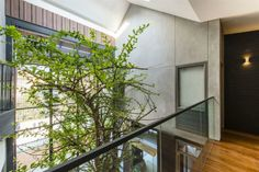 green tree in the house bring natural feel and sensing the movement of tree's top