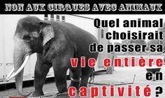 Pétition : Pour l'interdiction des cirques avec animaux à Rennes et sa métropole.