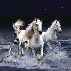 Gorgeous Horses, stars, night, dark, white horses, running, wild, water, splashing, beautiful, gorgeous, amazing, animals, cute, nuttet, photo.