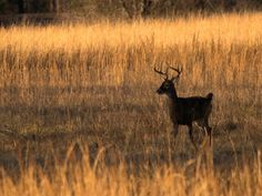 Grow with KARE: Homemade deer repellent