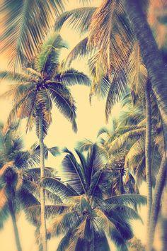 Palm www.saintluke.co