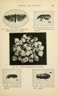 Injurious insects; - Biodiversity Heritage Library