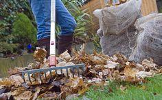 Your Top 10 gardening jobs for November - http://www.silverhairs.com/your-top-10-gardening-jobs-for-november/