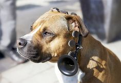 No More Woof: a product that translates your dogs thoughts into human language