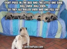 Thank You Bailey Puggins The Pug!