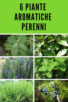 Garden Plants, House Plants, Kitchen Plants, Vertical Garden Diy, Green Life, Medicinal Plants, Kraut, Plant Care, Amazing Flowers