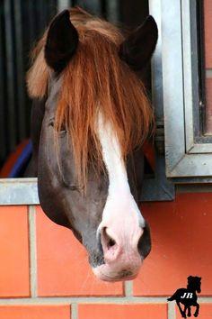 Pferde Horse Pony Kinder Sporttasche Reisetasche Tasche Sportbag Umhängetasche