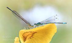 (5) Photos of nature (@bestphotonature) | Twitter
