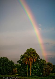 rainbows and palm trees--two reasons to love florida