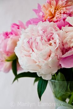Vivid Spring Nature Photography - Pink Peonies Wall Art - Fine Art Photography - Peaceful Home Decor - Pink Green Home Decor