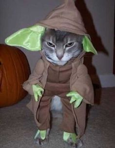 Yoda Cat Halloween Costume - What more to say other than we just LOVE cool stuff! Pet Halloween Costumes, Animal Costumes, Pet Costumes, Halloween Cat, Yoda Costume, Funny Costumes, Homemade Halloween, Halloween Pictures, Happy Halloween