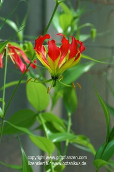 Die 90 Besten Bilder Von Schon Giftig Nice Asses Flowers Und Gardens