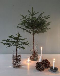 Likewise, that I live right on the forest, ma - conservatory ideas - Also, that I live directly in the forest, because ma / well - Minimalist Christmas, Modern Christmas, Christmas Design, Rustic Christmas, Winter Christmas, Christmas Home, Christmas Crafts, Black Christmas Decorations, Little Christmas Trees