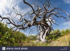 The Netherlands, Bonaire Island, Dutch Caribbean, Kralendijk, Old Stock Photo, Royalty Free Image: 39976560 - Alamy