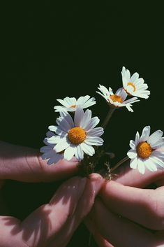 Close-Up Photography of Person Holding Chamomile Flowers Close-Up Photography of Person Holding Cham Daisy Wallpaper, Sunflower Wallpaper, Flower Phone Wallpaper, Aesthetic Backgrounds, Aesthetic Iphone Wallpaper, Aesthetic Wallpapers, Hand Photography, Close Up Photography, Flower Close Up