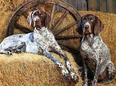 Resultado de imagen de perros de caza