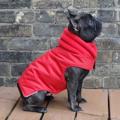 This made me laugh so hard. Look at how adorable she is!!//The Latch - Adult Girls French Bulldog/Pug Winter Dog Coat. $100.00, via Etsy.