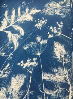 Borée, cyanotype, 30×41,5cm, 2019 ©GLSG – La Plume de l'Oiseau-Lyre Art Bleu, Cute Lockscreens, Sun Prints, Format A3, Cyanotype, Blue Art, Graphic Patterns, Art Boards, New Art