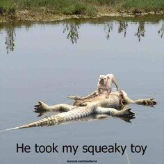 Dump A Day Attack Of The Funny Animals - 36 Pics