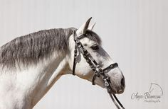 schreiben und fotografieren: Impressionen vom Workshop Pferdefotografie im Baro...