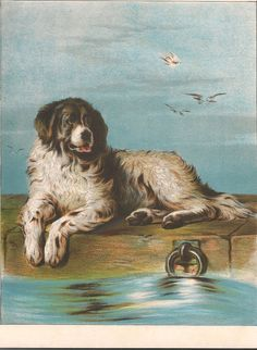 Newfoundland Terrier, Antique Print of the Sir Edwin Landseer Painting