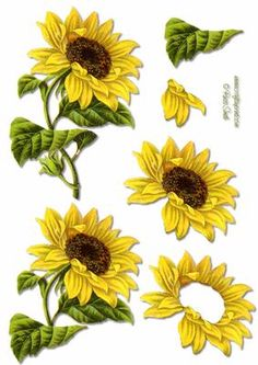 Decoupage sheet using a restored vintage image of a sunflower. Matching backing… Sunflower Stencil, Sunflower Template, Sunflower Art, Decoupage Plates, Decoupage Printables, Decoupage Letters, Decoupage Wood, 3d Paper Crafts, Paper Art
